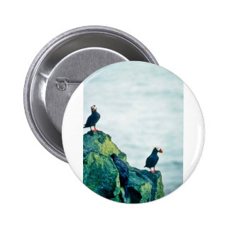 Tufted Puffins Pin