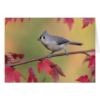 Tufted Titmice Stationery Note Card