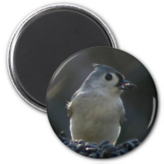 Tufted Titmouse 2 Inch Round Magnet