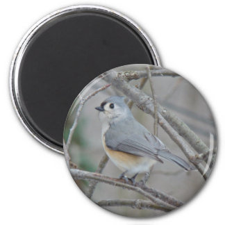 Tufted Titmouse (Baeolophus bicolor) Items 2 Inch Round Magnet