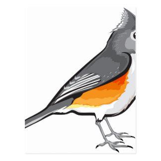 Tufted Titmouse Bird vector illustration clip-art Postcard