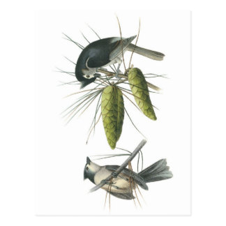 Tufted Titmouse by Audubon Postcard