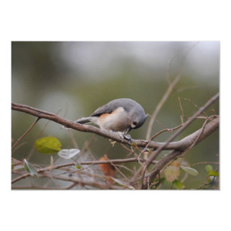 Tufted Titmouse Eating a Seed Card