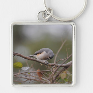 Tufted Titmouse Eating a Seed Key Chains