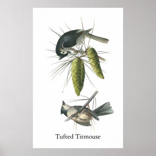 Tufted Titmouse, John Audubon Poster