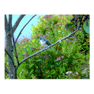 Tufted Titmouse: Newly Fledged Baby Bird Postcard