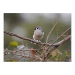 Tufted Titmouse Personalized Invite