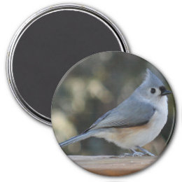Tufted titmouse photo magnet