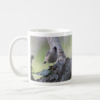 Tufted titmouse photography coffee mug