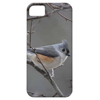 Tufted titmouse photography iPhone SE/5/5s case