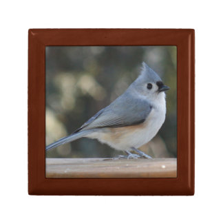 Tufted titmouse photography jewelry box