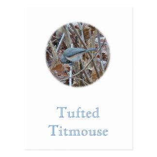 Tufted Titmouse Songbird Coordinating Items Postcard
