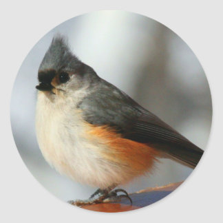 Tufted Titmouse Stickers