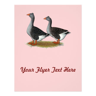 Tufted Toulouse Geese Personalized Flyer
