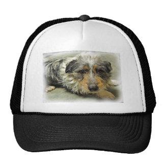 Tug at Heart Corgi Terrier Mix Dog Hats