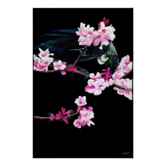 Tui Bird feeding On Cherry Blossoms - (LARGE) Poster