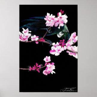 Tui Bird feeding On Cherry Blossoms - Poster