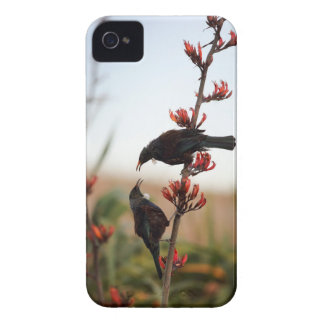 Tui birds on New Zealand flax iPhone 4 Case