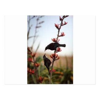 Tui birds on New Zealand flax Postcard