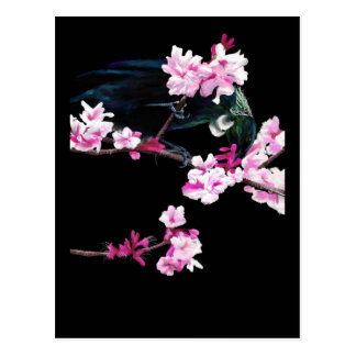 Tui Feeding on Cherry Blossoms Post Cards