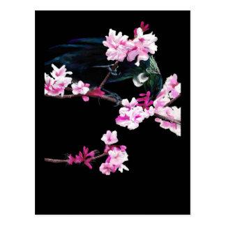Tui Feeding on Cherry Blossoms Postcard