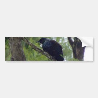 Tui in Rimu Tree Bumper Sticker