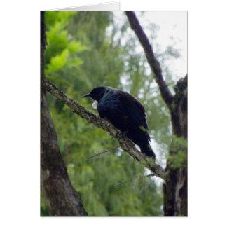 Tui in Rimu Tree Card