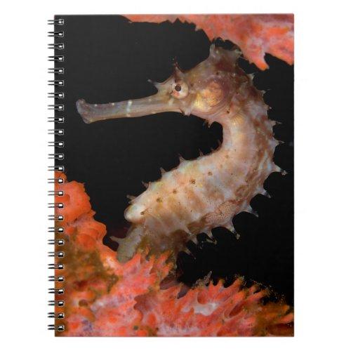 Tulamben Thorny Sea Horse Notebook