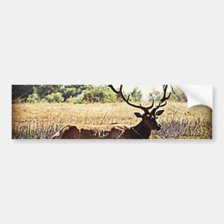 Tule Elk Bull Car Bumper Sticker