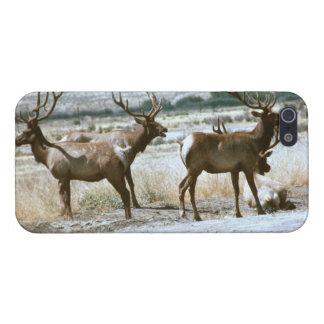 Tule Elk iPhone Cover
