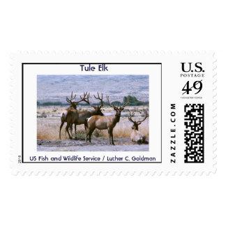 Tule Elk Postage