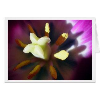 Tulip1 Card