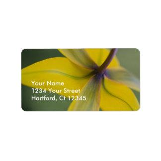 Tulip Address Labels