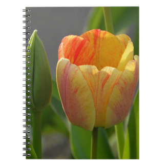 Tulip and Bud Spiral Note Books