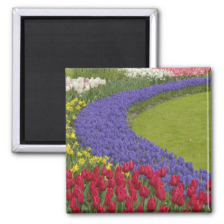 Tulip and Grape Hyacinth and daffodil garden, Refrigerator Magnet