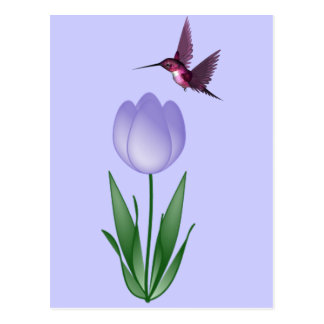 Tulip and Hummingbird Postcard