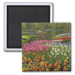 Tulip and hyacinth garden, Keukenhof Gardens, 2 Inch Square Magnet