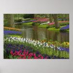 Tulip and hyacinth garden, Keukenhof Gardens, 2 Poster