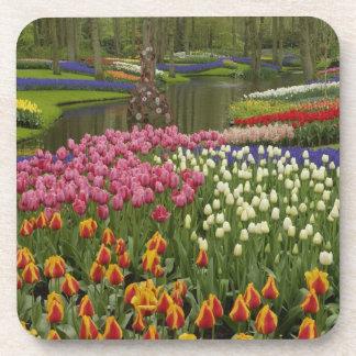 Tulip and hyacinth garden, Keukenhof Gardens, Beverage Coaster
