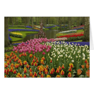 Tulip and hyacinth garden, Keukenhof Gardens, Greeting Cards