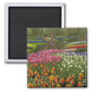 Tulip and hyacinth garden, Keukenhof Gardens, Fridge Magnet