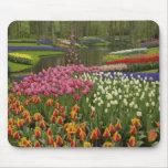 Tulip and hyacinth garden, Keukenhof Gardens, Mouse Pad