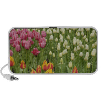 Tulip and hyacinth garden, Keukenhof Gardens, Mini Speakers