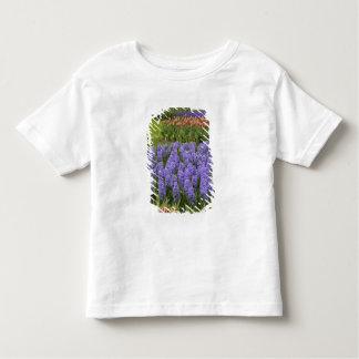 Tulip and Hyacinth garden, Keukenhof Gardens, Toddler T-shirt