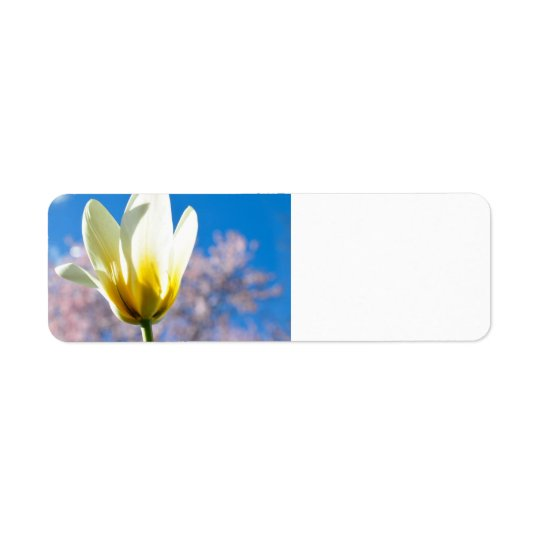 Tulip-and-sky1579 WHITE YELLOW TULIP FLOWER BLUE S Label