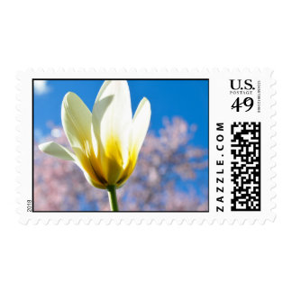 Tulip-and-sky1579 WHITE YELLOW TULIP FLOWER BLUE S Postage