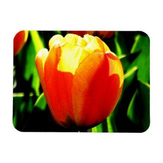 Tulip Art Magnet
