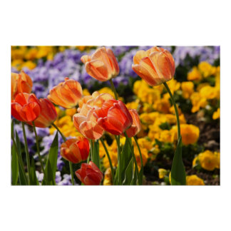 tulip bed poster