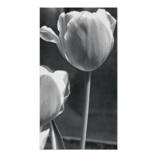Tulip Black and White Poster