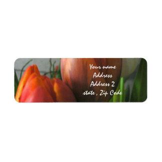 Tulip blooms label